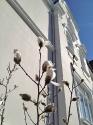 Blütenpracht an der Weststrasse 22_1